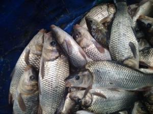 У водойми Херсонщини вселено понад 13 тонн риби, - Херсонський рибоохоронний патруль